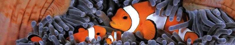Pesce Pagliaccio E Anemone.Il Pesce Pagliaccio Una Simbiosi Di Divertimento Per Bambini E Ragazzi In Visita All Acquario Di Livorno Acquario Di Livorno